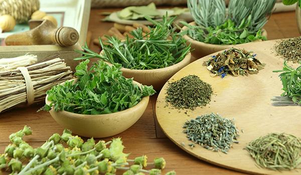 Oficina Terapêutica de Plantas e Ervas – Vikas